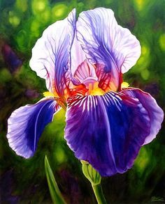 The Blue Iris is the state flower of Tennessee. As I was growing up, I looked forward to their showy colors every Spring.