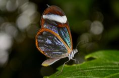 Nature Photography, Wings, Butterfly, Glass, Animals, Animales, Drinkware, Animaux, Corning Glass