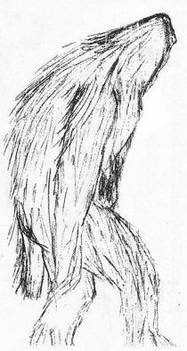 Sketch of Yowie by Katrina Tucker following a sighting made in Acacia Hill, Northern Territory, in August 1997.