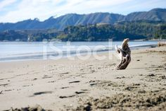 Driftwood on Pohara Beach, Takaka in Golden Bay, NZ royalty-free stock photo