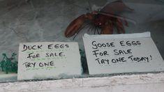 Even more unpretentious shop signage, Holyhead Shop Signage, Anglesey, Flora, Coast, Album, Books, Libros, Book, Plants