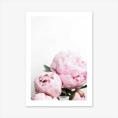 Peony Print Flower Wall Art Nature Prints Floral Print
