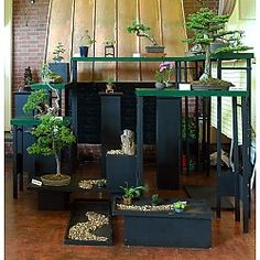 The Bonsai Society of Greater Hartford 31st Annual Bonsai Show West Hartford, CT #Kids #Events