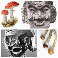 Breaking the Mushroom Code - HIDDEN IN PLAIN SIGHT