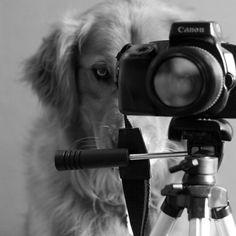 Inspirational Dog Portrait Photographs – Bt images