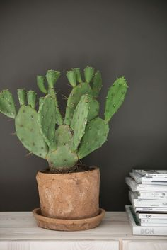 May 2020 - green herbs plants cacto. See more ideas about Plants, Planting flowers and Indoor plants. Opuntia Cactus, Cactus Plante, Pot Plante, Cactus Y Suculentas, Indoor Cactus Plants, Cactus House Plants, Best Indoor Plants, Green Plants, Garden Cactus