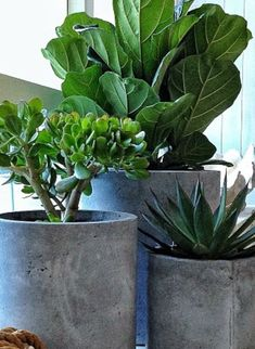 Identifying Common House Plants tropical house plants, identifying, common, low light, buy indoor