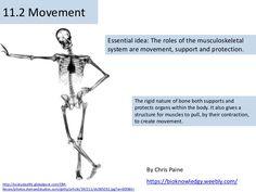 BioKnowledgy Presentation on 11.2 movement (AHL)