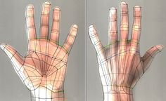 To modelling a hand. u need a hand topology reference ,. open new tab to enlarge hand reference Cinema 4d Tutorial, Animation Tutorial, 3d Tutorial, Modeling Classes, Modeling Tips, Human Body Model, Mode 3d, Character Modeling, Character Creation