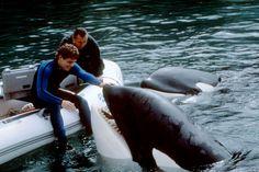 Keiko a été relâché dans les océans à la fin de sa carrière