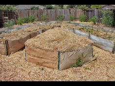 Starting a backyard Food Forest Years & 3 Backyard Fort, Large Backyard Landscaping, Backyard Farming, Natural Farming, Natural Garden, Garden Spaces, Garden Beds, Fall Clean Up, Plants For Hanging Baskets