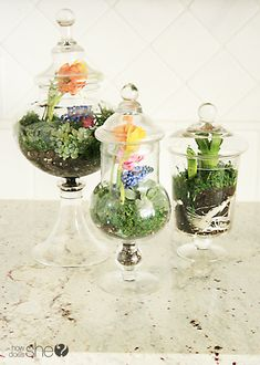How to create magnificent floral terrariums: howdoesshe.com