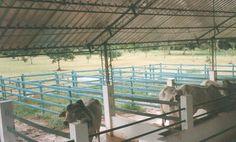 corral estabulado 12 corral redondo exposiciones ganaderas engorde corrales  construcción corralejas para ganado exposiciones comerciales corrales de negocios manejo ganado en corral redondo o picadero corraleja