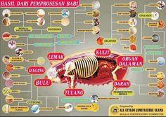 22 Daftar Istilah Daging B2,Waspadalah!