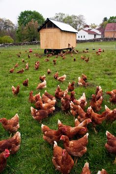 Why Pastured Eggs? Upcoming Workshops and New Recipes from Diana at Radiance Nutritional Therapy