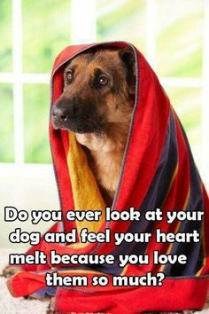 True about German Shepherds, true about all breeds