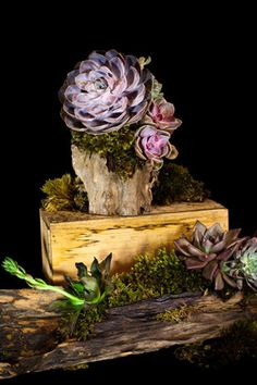 Succulents in Driftwood (via Flower Girl NYC) - beautiful & whimsical flower pieces. Cacti And Succulents, Planting Succulents, Planting Flowers, Succulent Ideas, Air Plants, Indoor Plants, Apartment Makeover, Bright Homes, Autumn Home