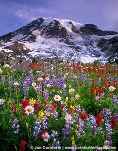 Photo of wildflowers overlooking Mt Rainier by Jon Cornforth