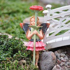Zinnia Fairy - $13.35