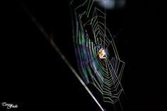 Teresa Fndz Photography: Cobweb