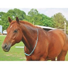 Use the code MBRFR for off! Custom Neck Rope for Tackless Riding Horse Gear, Horse Tack, Horse Stalls, Horse Barns, Dressage Horses, Equestrian Outfits, Equestrian Style, Equestrian Problems, Westerns