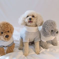 """Acquire excellent tips on """"toy poodle"""". They are on call for you on our website. Purebred Dogs, Separation Anxiety, Losing A Dog, Training Your Dog, Maltese, Dog Owners, Poodle, Best Dogs, Chihuahua"""