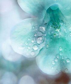 Since aqua is my favorite color, I just HAD to pin this Tiffany Blue, Verde Tiffany, Azul Tiffany, Shades Of Turquoise, Shades Of Blue, Turquoise Flowers, Aqua Color, Aqua Blue, Mint Green