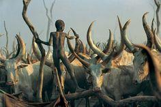 Dinka del Sudan, gruppo etnico nilotico Nilo-sahariana