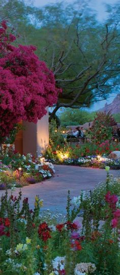 The Hermosa Inn in Paradise Valley, Arizona Cambelback Mountain in the background with Kneeling Monk. Arizona mesquite and bouganvilla Backyard Arizona, Arizona Gardening, Beautiful Gardens, Beautiful Flowers, Gazebos, Backyard Landscaping, Backyard Ideas, Garden Ideas, Backyard Patio