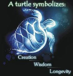 A symbol of longevity, protection, order, and creation, the turtle is a revered totem in many cultures. Mysticurious helps you to discover the various aspects of turtle symbolism in different cultures. Cute Turtles, Baby Turtles, Turtle Symbolism, Turtle Quotes, Turtle Time, Reptiles, Mundo Animal, Tortoises, My Spirit Animal