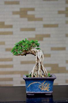 How For Making Your Landscape Search Excellent Bonsai Art, Bonsai Plants, Bonsai Garden, Bonsai Trees, Bushes And Shrubs, Mame Bonsai, Sandy Soil, Live Plants, Greenery