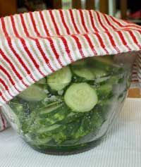 How to make pickles , dill pickles without canning.