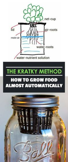 The Kratky Method is the simplest, most hands-off method for growing plants that I've ever seen - it's great for beginners and veteran gardeners alike. gardening for beginners The Kratky Method: How To Grow Food Almost Automatically Hydroponic Farming, Hydroponic Growing, Aquaponics System, Diy Hydroponics, Aquaponics Garden, Hydroponic Tomatoes, Hydroponic Lettuce, Indoor Farming, Potager Garden