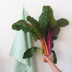 light green | organic market | bruxelles ma belle | nature | inspiration | colors | studio | botanical colors | jørgen & gaspard