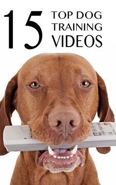 15 great top training videos to help you train your dog