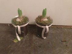 Svibler med mose og pyntebånd Planter Pots