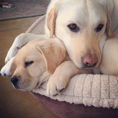 """pillow"" ..aww, cute."
