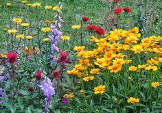 #-neuer Gartentraum Mädchenauge, Glockenblumen, Monarden und Flammende Liebe blühen mit Ochsenaugen