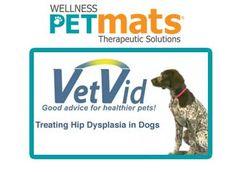 hip dysplasia, pet care, pet health