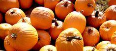The History of a Pumpkin: Decor, Dessert & Drinks
