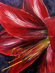 Amaryllis by Elizabeth Webb  WATERCOLOR