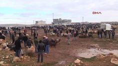 06.Başkent Haber: Beypazarı'ndaki Şap Hastalığı Nedeniyle Hayvan Pazarı Kapatıldı