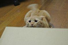 「絶対に獲物がとれなさそう」な猫