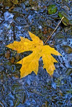 Last Leaf « Igor Menaker Fine Art Photography