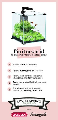 Repin to win a Nanolife aquarium worth 90 euros The Nanolife CUBE range is aimed at amateurs who are looking for more #trendy design. The Nanolife CUBE aquarium's modern design brings a touch of elegance to your home.  Want more details, click here > http://ymp.io/u/DqD #Zolux #yummypets #aquarium #fish #home #deco #lifestyle #elegance
