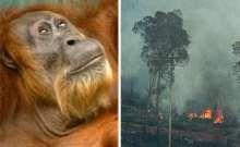 Palm Oil Factsheet. Help save my favorite animals!