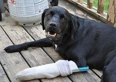 Useful Tips for How to Deal with Common Pet Emergencies