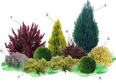 Garden Inspiration, Plants, Beautiful Gardens, Garden Plants Design, Ornamental Grasses, Evergreen Garden, Garden Planning, Garden Design, Creative Landscape
