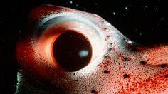 Tiefsee: Tiere wie von einem anderen Planeten - Bilder & Fotos ...