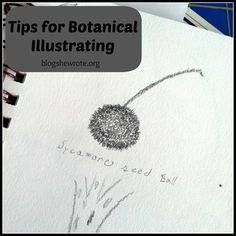 Botanical illustrators are still needed to provide detail that a photograph may not easily reveal. Cross sections are drawings because the a...